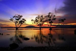 Silhouette von Bäumen in der Nähe von Gewässern foto