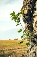 Zweig mit Blättern am Baumstamm