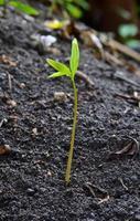 Nahaufnahme der kleinen Pflanze foto