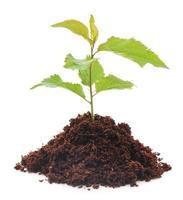 neue Pflanze foto
