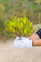 Hand halten und neuen Baum pflanzen foto