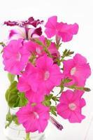 rosa Petunienblumen in der Glasvase foto