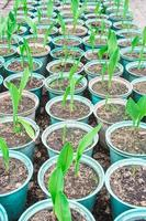 Nahaufnahme Pflanze im Topfanbau foto