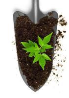 wachsende Pflanze auf einer Kelle foto
