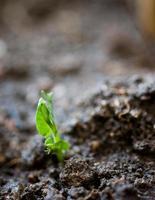 kleine Pflanze foto