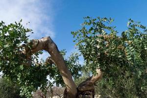 Entwicklung mit Biodiversität. foto