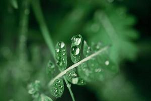 Wassertropfen auf dem grünen Gras. Makro