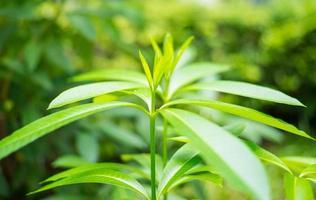 Pflanze foto