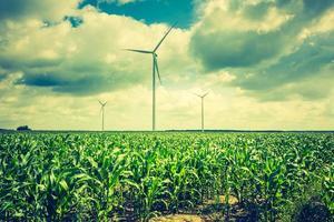 Weinlesefoto von Windmühlen, die auf Maisfeld stehen foto