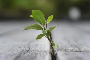 Pflanzenspross auf dem Holzboden foto