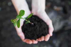 Pflanze in Händen foto