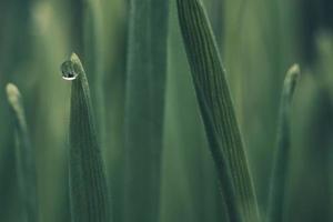 Wassertau auf grüner Pflanze foto
