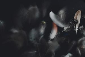 weiße und schwarze Federn