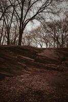 Laub in der Nähe von Felsen und kahlen Bäumen