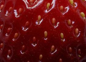 rote Erdbeersamen