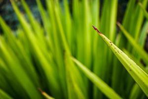 grünes Gras im Freien foto