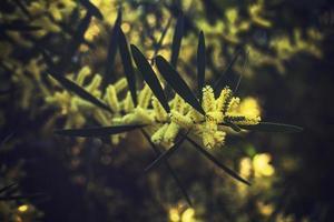 gelber Blumenstrauch foto