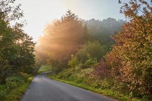 graue Asphaltstraße zwischen Bäumen