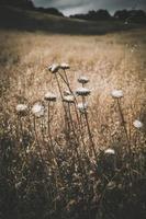 weiße Blüten im braunen Feld