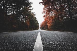 Straße durch bunte Bäume foto