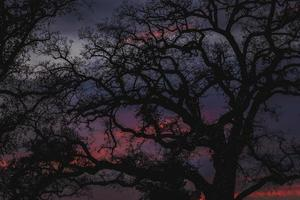Bäume mit Lichterketten bei Sonnenuntergang