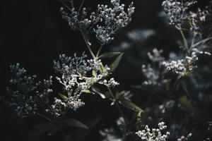 Nahaufnahmefoto von Blumen foto