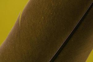 brauner Stock und Textilien auf gelb