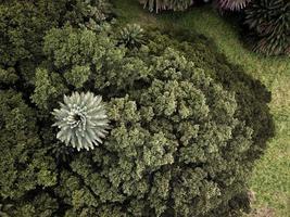 Luftaufnahme von grünen Bäumen foto