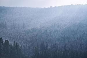 grüne Bäume unter weißen Wolken foto