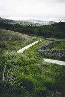 gepflasterter Weg in der Nähe von Gras und Pflanzen foto