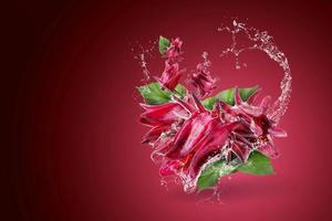 Wasser spritzt auf Roselle Hibiskus foto