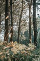 Bäume im Wald foto