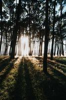 Bäume, die im Sommer ein Sonnenbad nehmen