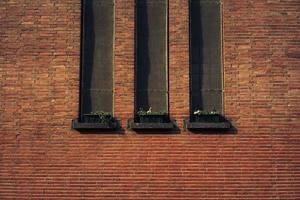 drei Topfpflanzen foto