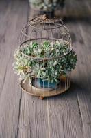 Nahaufnahme der grünen Sukkulentenpflanze im Käfig foto