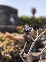saftige Blume auf Zweig