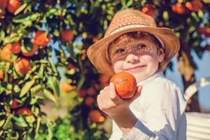 Porträt des attraktiven niedlichen Jungen, der Mandarinen bei Zitrusfrüchten pflückt