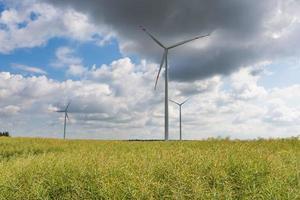 Windmühlen stehen auf Maisfeld foto