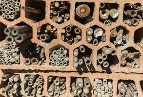 Unterkunft für Wildbienen foto