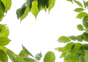 grüner Blätterrahmen auf weißem Hintergrund foto