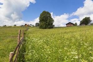Weide in der Nähe des Dorfes Markovskaya, Bezirk verhovazhskogo, Region Wologda, Russland foto