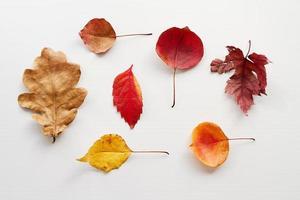 Draufsicht auf verschiedene Herbstblätter auf weißem Hintergrund
