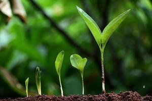 Pflanzenwachstum - neues Leben foto