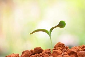 wachsende Pflanze foto