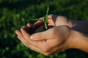 Hände halten Sämling mit Erde auf grünem Bokeh Blackground foto