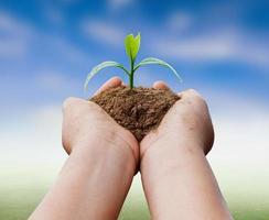 Hände halten Pflanze über Naturhintergrund foto
