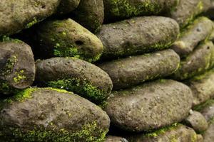 grünes Moos auf den Stein- und Backsteinmauern in Bali.