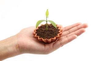 Hand hält eine Babypflanze foto