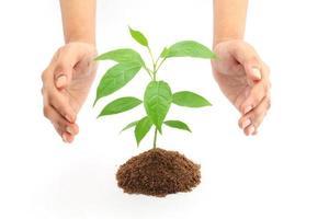 Hände, die Babypflanze schützen foto