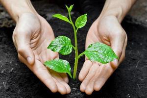 Hände wachsen Baum